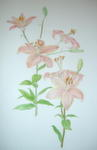 A FINE LARGE ORIGINAL WATERCOLOUR OF A LILY CULTIVAR, BY LORNA B. KELL